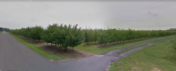 działka gruntu z sadem Mąkolno